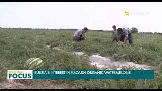 Russia's Interest in Kazakh Organic Watermelons