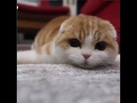 Bets Funny Cat Videos | Cats Tv