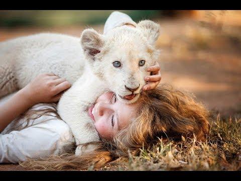 Mia y el león blanco - Trailer español (HD)