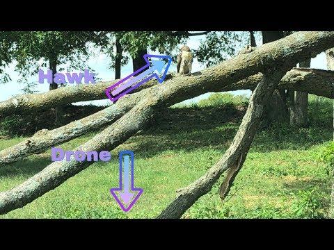 FPV Freestyle - Hawk's Love Racing Drones? - UCMqR4WYZx4SYZJOsM3SWlCg