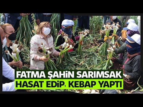 Araban sarımsağında ilk hasadı Belediye Başkanı Fatma Şahin'den