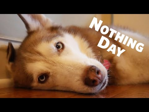 Happy National Nothing Day with Laika the Husky