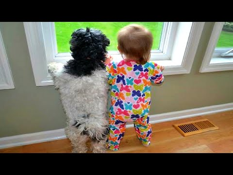 HILARIOUS MOMENTS with DOGS & KIDS - So cute and funny!