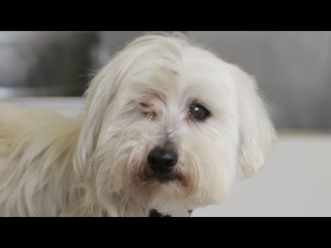 Homeless Dog Gets Makeover That Saves His Life! - Bailey - UCPIvT-zcQl2H0vabdXJGcpg