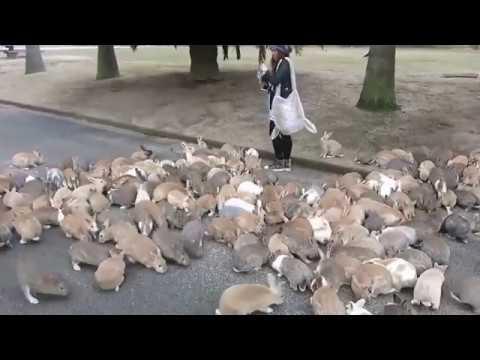 L'isola dei conigli si chiama Ōkunoshima e si trova in Giappone