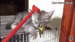 Kittens Play With Hand Toy So Funny