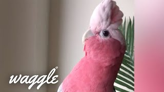 Best Pets Ever | Cutest and Funniest Animal Clips of the Week