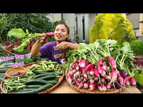 Hái dưa leo, đậu que, đậu tằm, việt quất, mâm xôi, củ cải đỏ chấm muối ớt & cách trồng siêu dễ #937