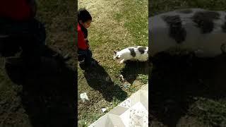 Child's videos
