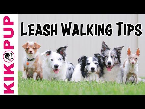Loose Leash Walking TIPS
