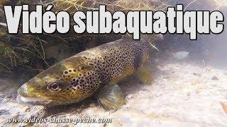 Truites, brochets.. en vidéo subaquatique
