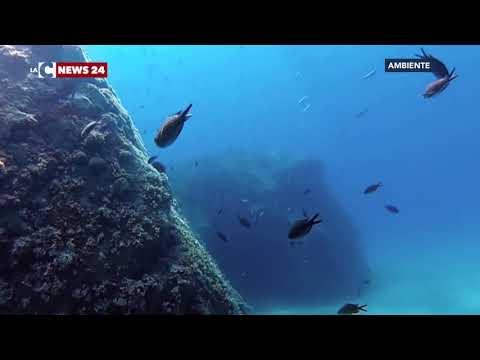 Costituito l'Ente per i Parchi Marini regionali