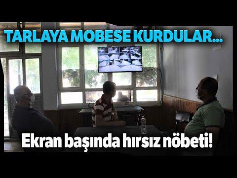 Köylüler Tarlaya MOBESE Kurdu, Kahvede Çay İçerken Hırsız Nöbeti Tutuyor