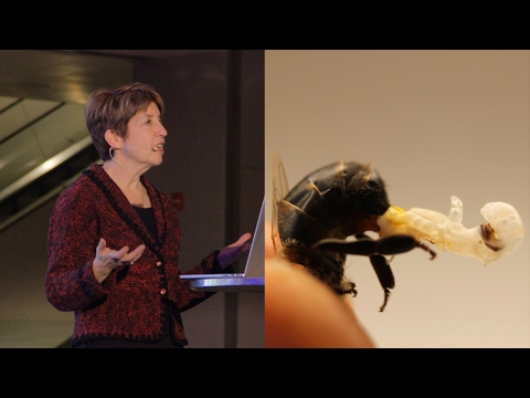 The Surprising Lives of Insects - AMNH SciCafe