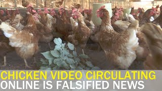 Fake news video incites fears over eating chicken | Taiwan News | RTI