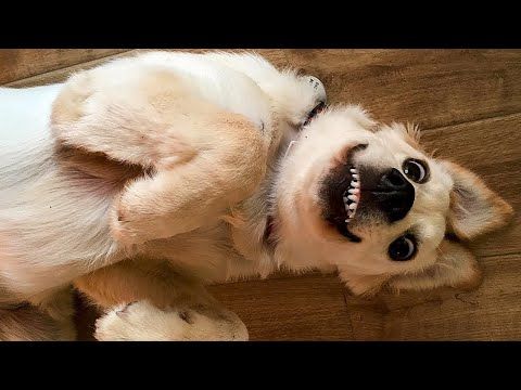 🤣 Funniest 🐶 Dogs and 😻 Cats - Awesome Funny Pet Animals Life Videos 😇 - UC09IvZwjpunzrdHH1EHok-w