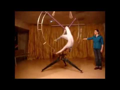 Contortion And Flexibility Demo