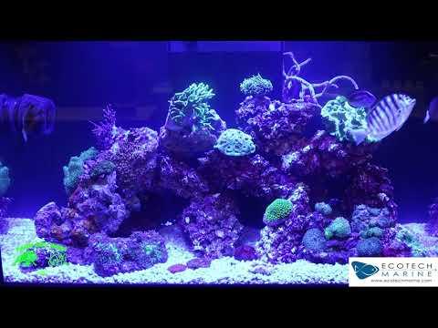 Ecotech Marine  Aquarium at the Macna show