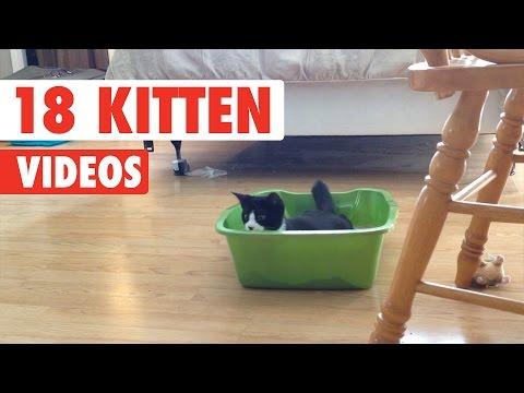 18 Funny Kitten Videos Compilation 2017 - UCPIvT-zcQl2H0vabdXJGcpg