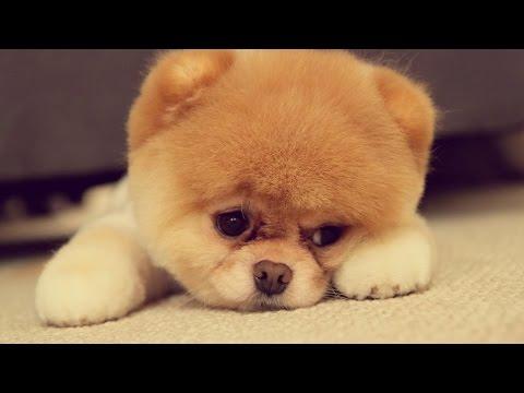 Cute Puppies doing funny stuff - UCU9-D4M8WYhMV8tW2TMJuIQ