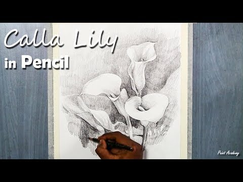 Calla Lily Drawing in Pencil | step by step Drawing and Shading techniques