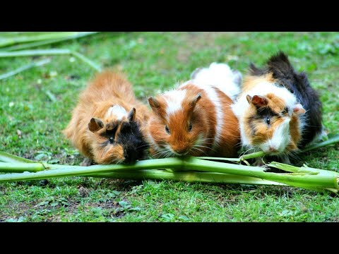 Look! Cute Baby Animal Videos, Super Funny Animals, Cutest Pets, Lovely Animals, - UCv1EJq5MaAHuLYLPGt1DV8w