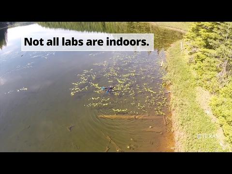 Daniel Bolnick - UT Integrative Biology Professor - Learning from Nature