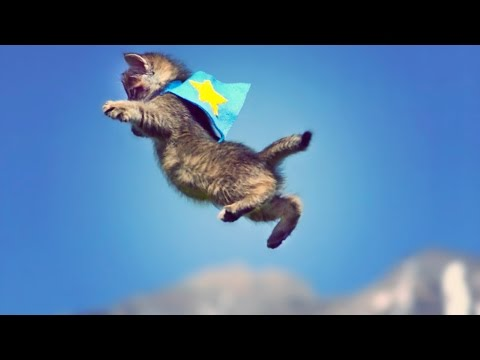 CUTE KITTENS FLY IN SLOW MOTION! // ScottDW - UCaXDyLT3Xs4p8B0B79GFZCQ