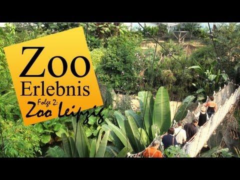 Zoo Leipzig - Zoo Erlebnis #2 - UCMbOFR8BSlg4Tuvh8090chQ