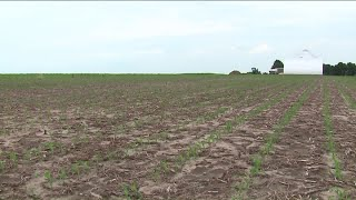 Unprecedented spring rain still affecting Illinois farmers, communities where they live