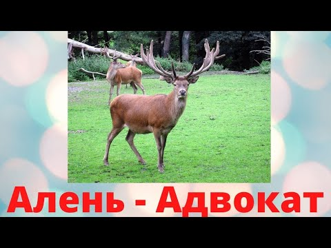 Алень Адвокат photo