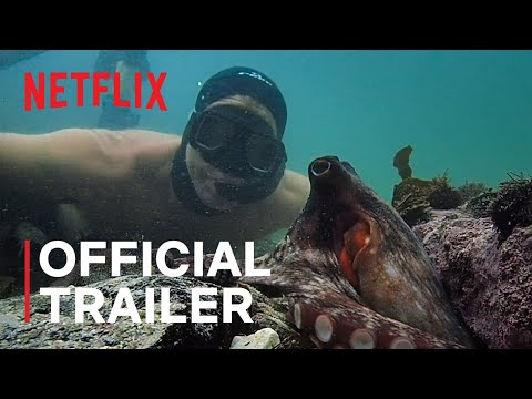 My Octopus Teacher | Official Trailer | Netflix