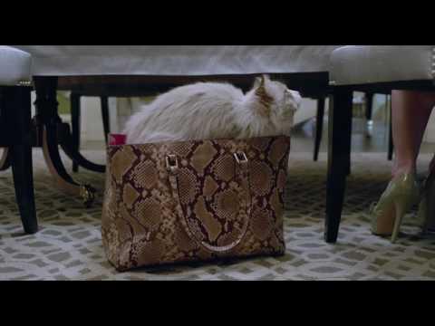 Siete vidas, este gato es un peligro - Trailer final español (HD)