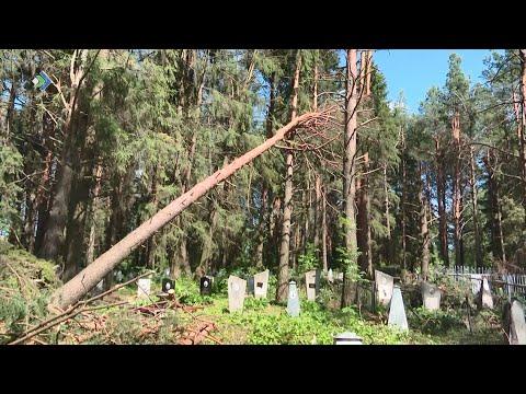 В Визинге и Куратово продолжают устранять последствия урагана