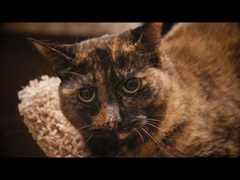 Meet Sadie
