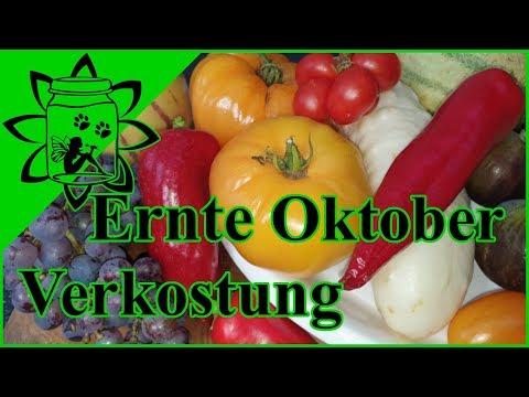 Ernte Erfolg Anbau Freiland |  Pepino Feigen Tomaten Zuckermelone | Geschmack Test | Garten Oktober