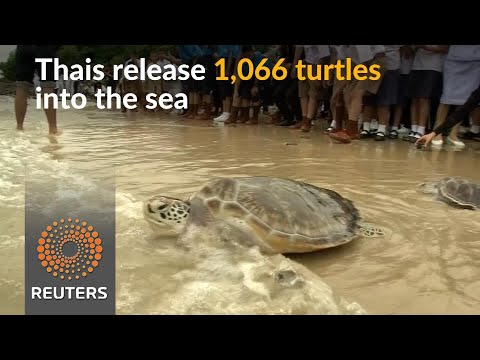 Thais wish their king a happy birthday by releasing turtles into sea