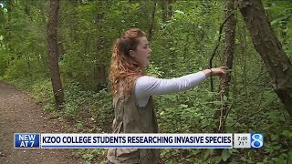 Kzoo College students researching invasive species