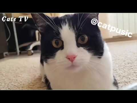 Bets Funny Cat Videos #2 | Cats TV