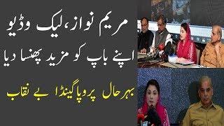 Hassnat Tv Bashing On Latest Maryam Nawz Press Release