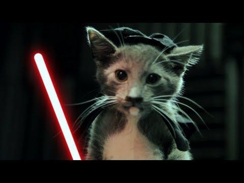 Jedi Kittens Strike Back - UCz1QsQ8muaV49t_7SqR4CLw
