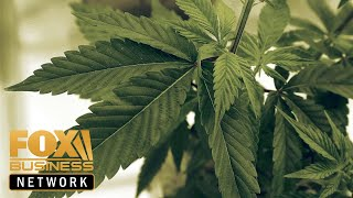 World's largest legal marijuana company welcomes CBD regulation