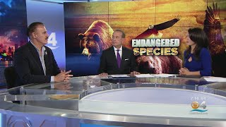 Zoo Miami's Ron Magill Discusses Potential Ramifications Of Trump Administration Scaling Back Animal