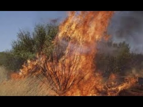 Prophetic Insight Did You See The Burning Bush