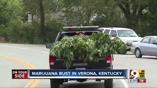 Marijuana bust in Verona, Kentucky