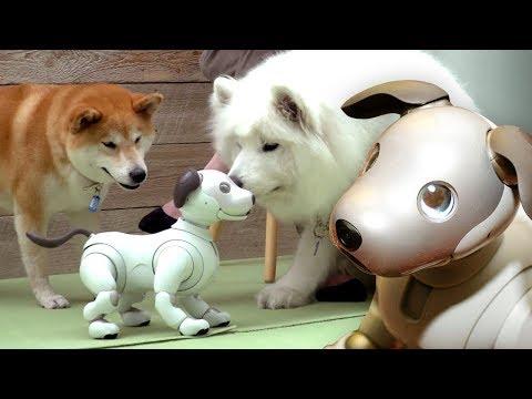 Dogs react to $3000 Robot Dog - UCOmcA3f_RrH6b9NmcNa4tdg