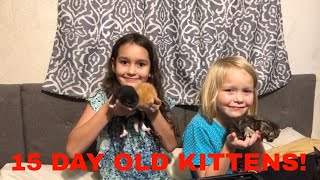 Cute  girls playing with baby kittens.  Kittens update at about 15 days