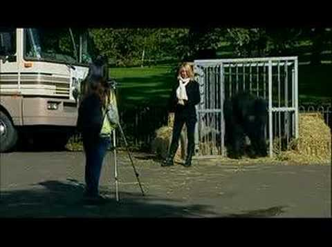 Funny Gorilla Prank