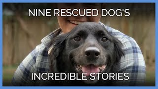 See These Nine Rescued Dogs' Incredible Stories