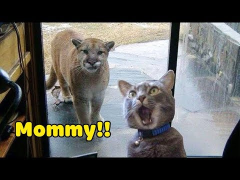 Funniest Animals 2020 Compilation - Awesome Funny🐶 Dogs and 😻 Cats - UCuPFZxpy1mV43WPkzj3cm3w